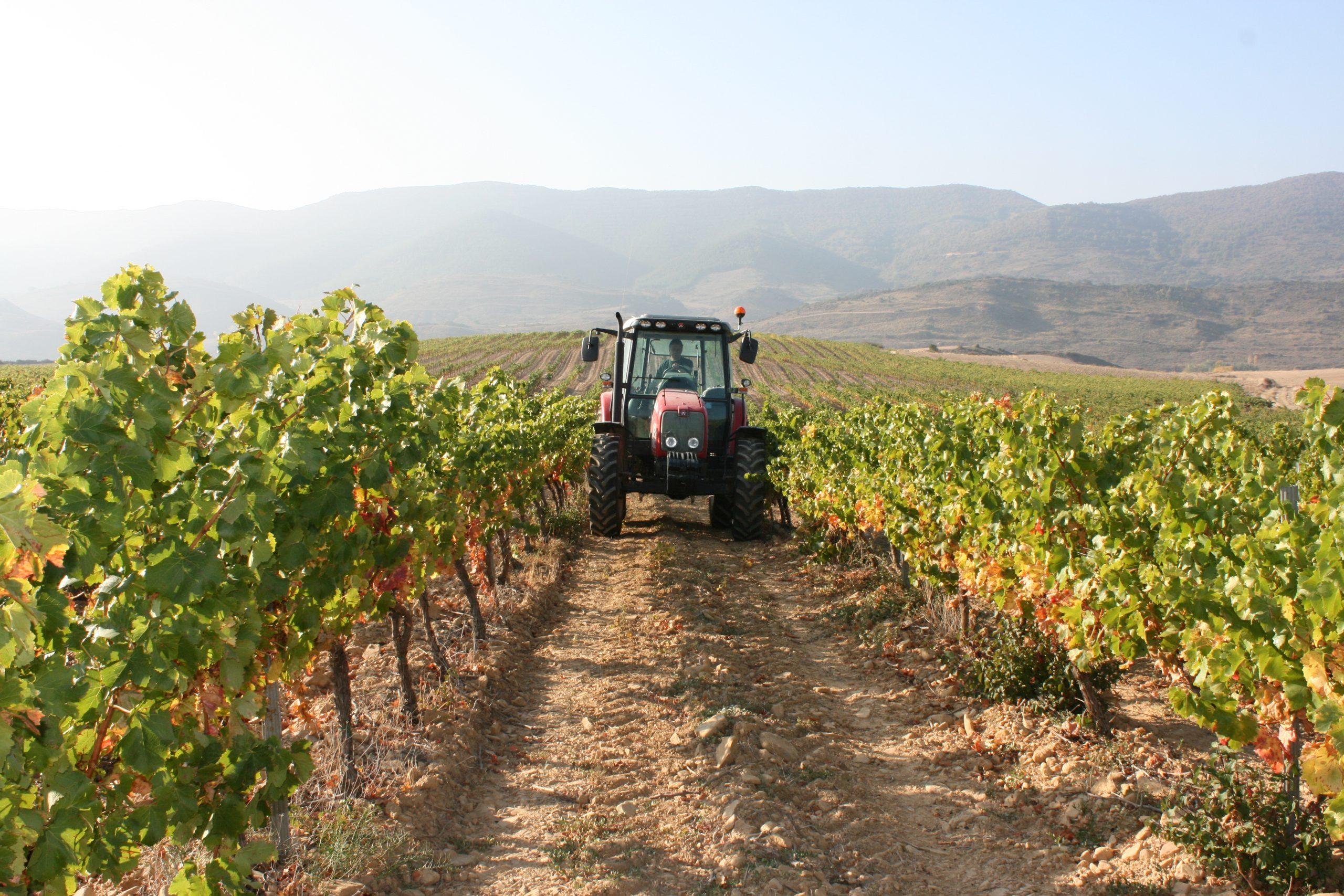 Real Decreto 557/2020, de 9 de junio, por el que se adoptan medidas extraordinarias en el sector del vino para hacer frente a la crisis causada por la pandemia de covid-19
